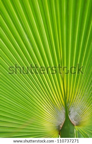 Leaves of palm tree, detail shot