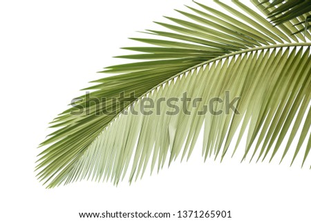 Leaves Palm
