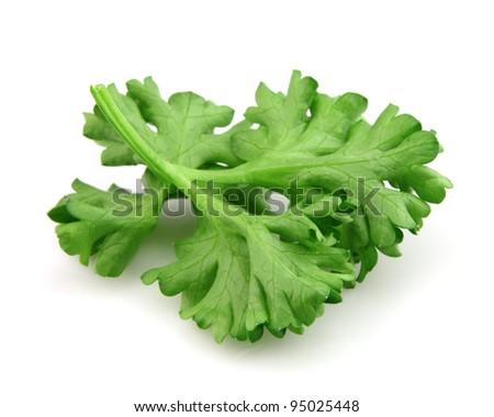 Leaves of parsley
