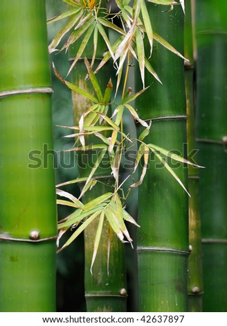 Leaves on bamboo stalks