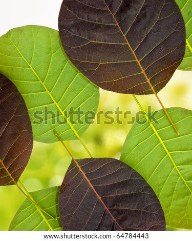 leaves on beautiful background