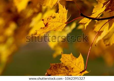Leaves on the branches in the autumn #1062395327