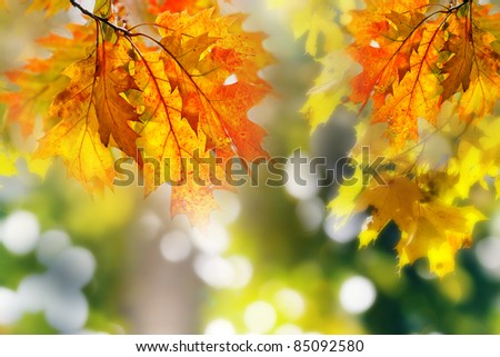 Leaves on the branches in the autumn forest. - stock photo