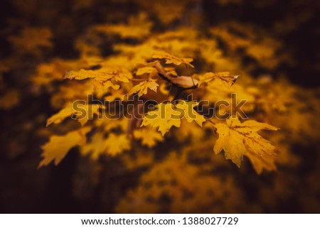 Leaves on the ground in Fall  #1388027729