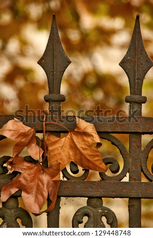 Leaves on the iron fence