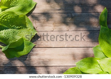 leaves on the old wooden background