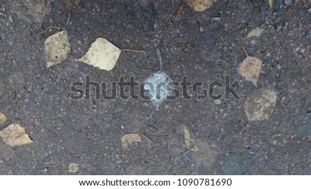 Leaves on the road in late autumn #1090781690