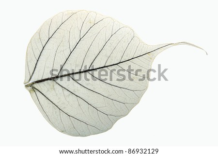 Leaves on the white background