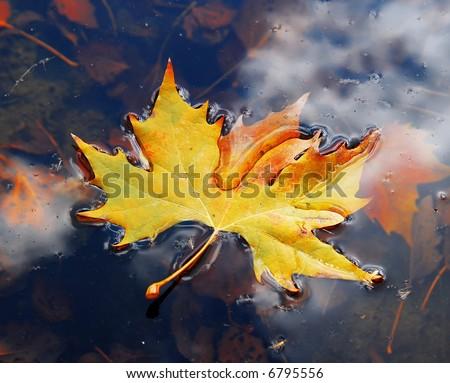 Leaves on water in November