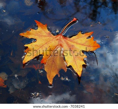 Leaves on water in November