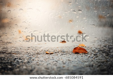 Leaves on wet ground.View through the window of strong rainy day.
