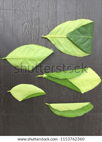 Leaves pattern concept #1153762360