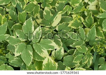 Leaves pattern. Green fresh field. Natural concept. Botanical