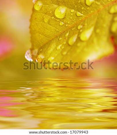 leaves reflecting in the water, shallow focus