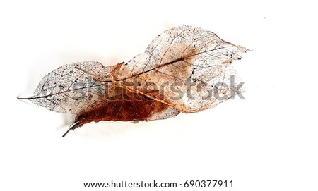 leaves skeleton #690377911