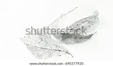 leaves skeleton #690377920
