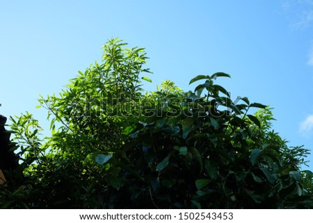 Leaves, sunlight, sky, the perfect balance