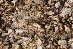 Leaves texture. Leaf background. Autumn forest ground background. Golden yellow leaves on the ground. Fall season path in a park texture. Dry vibrant leaf organic landscape.
