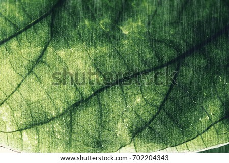 Leaves tree textures for abstract background,dark tone,art design,vintage,retro style,made with filter colored.selective focus.