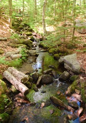 leaves, trees, rocks and logs beside a forest stream
