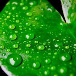 Leaves, water drops