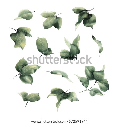 Leaves, watercolor, can be used as greeting card, invitation card for wedding, birthday and other holiday and  summer background.