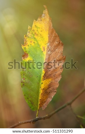 Leaves with brown and yellow in autumn - Shutterstock ID 511331290