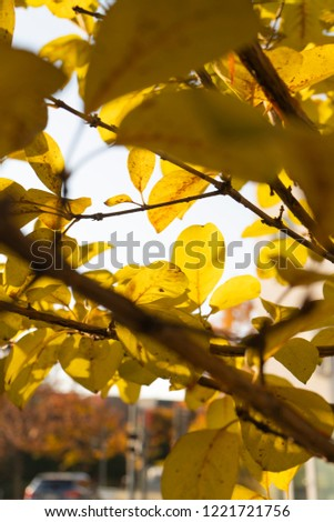leaves with yellow   #1221721756