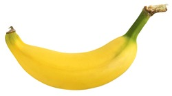 Lebmuernang banana isolated on white background with clipping path. When raw has green and yellow when ripe. High energy and 3 types natural sugars: sucrose, glucose and fructose.