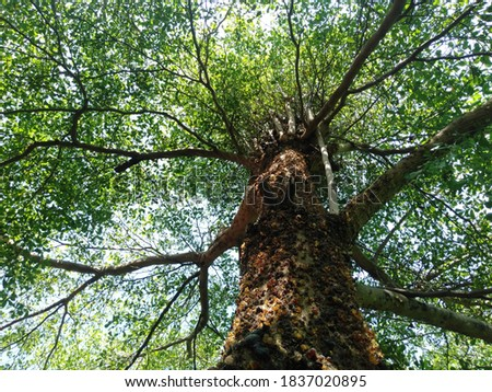 Lee, the tree trunk and leaves soothing Photo stock ©