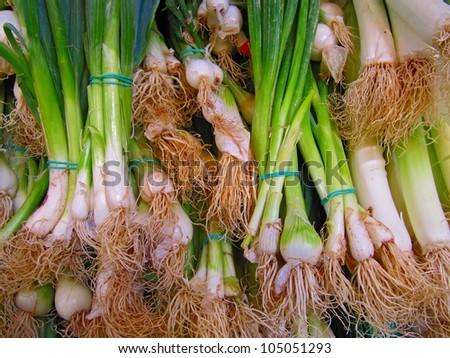Leeks, (Allium porrum) or elephant-garlic.