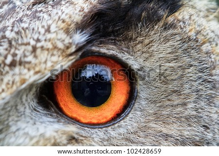 left eye of eagle owl very close up with small depth of field