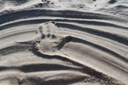 Left hand mark in the sand with furrowed lines.