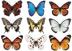 left to right: peacock butterfly (Vanessa io), blue morpho, monarch (Danaus plexippus), tiger swallowtail (Papilio glaucus), swallowtail (Papilio machaon), black veined white (Aporia crataegi), apollo