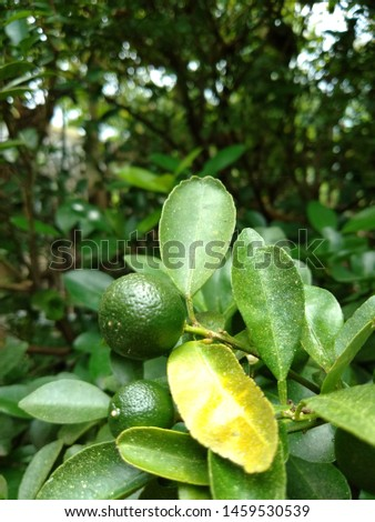 Lemon, a yellow citrus fruit that has a sour taste.