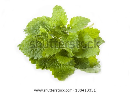 Lemon balm leaves on white isolated background - stock photo
