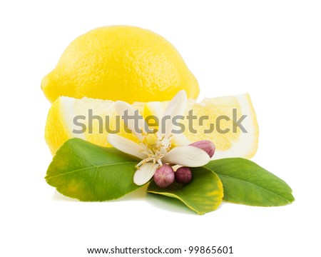 Lemon, leaf, flower and slice. Isolated on a white background.