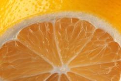 Lemon sliced close-up citrus background macro photography