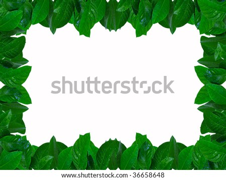 lemon tree with water drops isolated on white