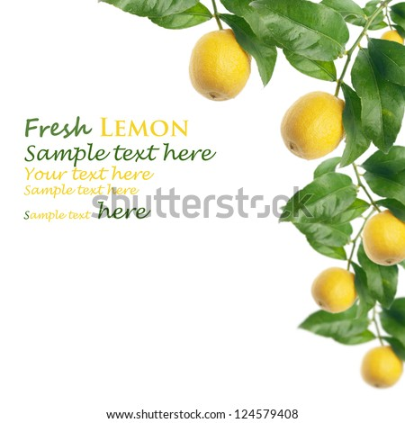 lemon tree with white background