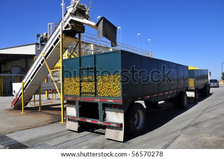 Lemons are loaded onto trailers at a California processing plant