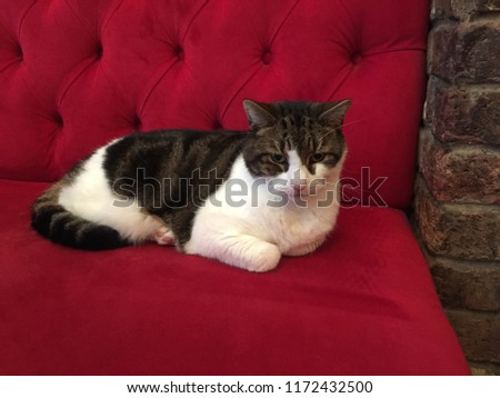 Lenny the Cat from The Pride of Spitalfields Stock fotó ©