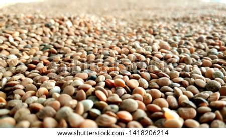 Lentil. beans pile in store room.