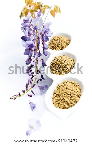Lentil grain with wisteria