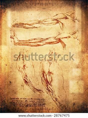 leonardo da vinci style arms illustration