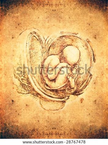 leonardo da vinci style fetus illustration