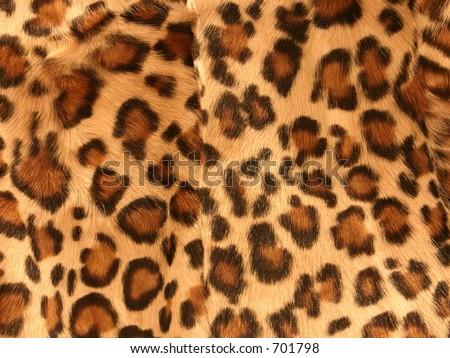 leopard #701798
