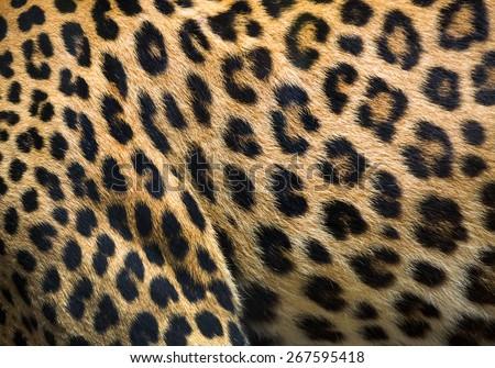 leopard and ocelot skin texture. #267595418