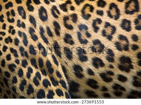 leopard and ocelot skin texture. #273691553