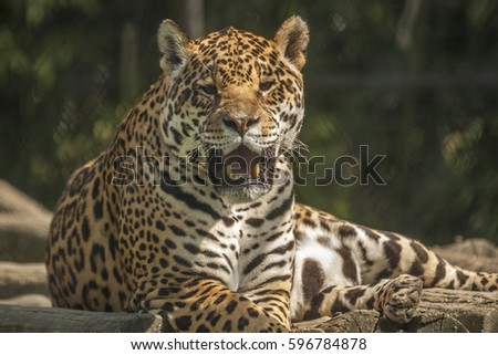 leopard face in zoo garden #596784878